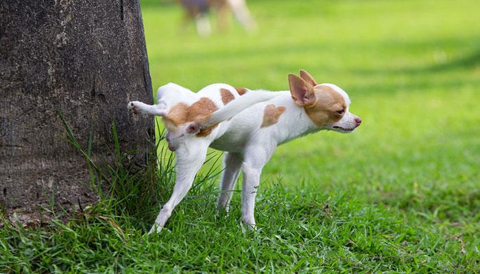 Cane con infezione delle vie urinarie: farmaci e cure naturali