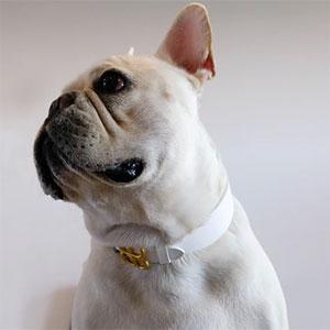 Collare in Pelle per Cani Modello Icon Bianco