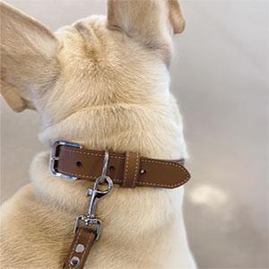 Collare in Pelle per Cani Modello Nature Greige