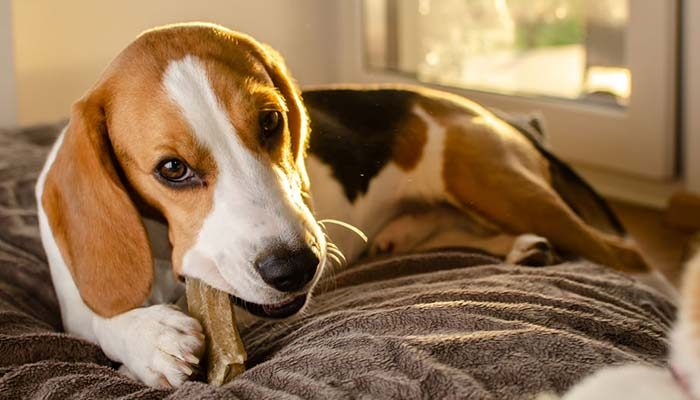 Ossi per cani da masticare: i migliori consigliati