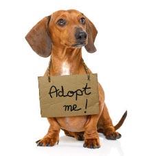 Adotttare un cane abbandonato