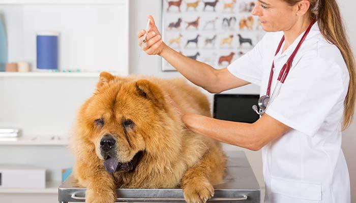 LEISHMANIOSI CANINA sintomi cure e prevenzione