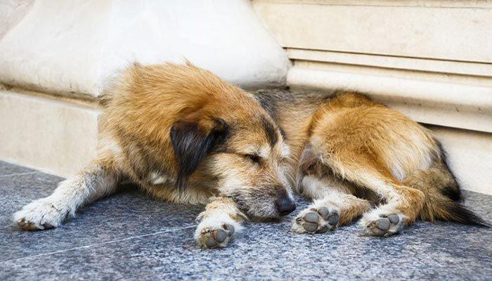 Trovato un cane abbandonato per strada ecco cosa fare