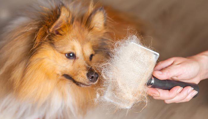 Come spazzolare il cane