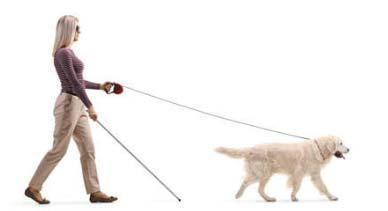 Pet Therapy per diversamentre abili