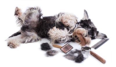 Spazzolare il cane con le migliori spazzole