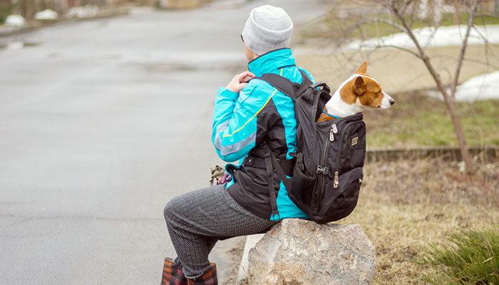 Zaini per cani: i migliori modelli consigliati da acquistare