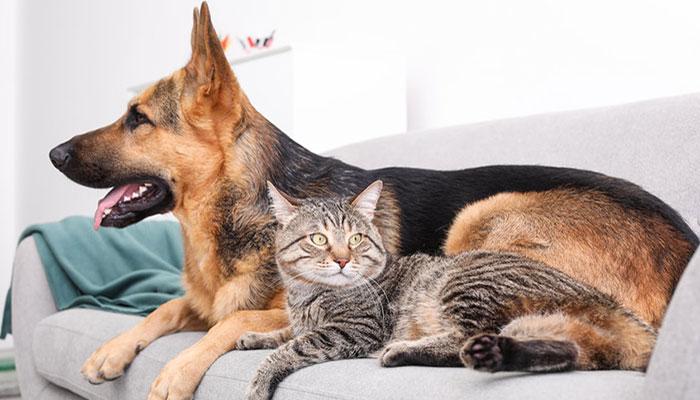 Rimuovere i peli del cane e del gatto da divano e vestiti