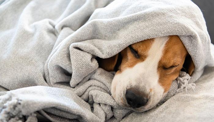 Copertine per cani: le migliori da scegliere per l'inverno